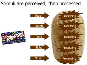 slide-assertion-titles-002